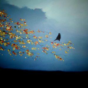 Bird-in-the-Birch-Tree